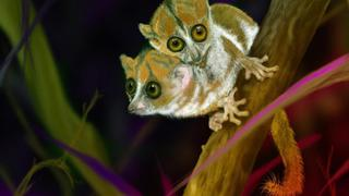 FirstWorld Saga - Two-Headed Lemur Creature